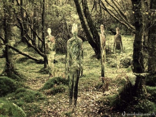 Gąsdinanti instaliacija miške