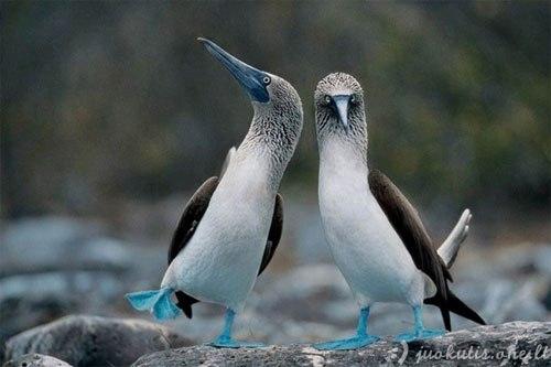 Linksmiausi paukščiai pasaulyje