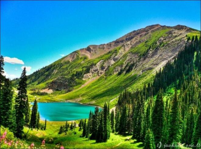 Nuostabi gamta