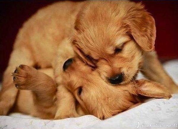 Mieli šuniukai