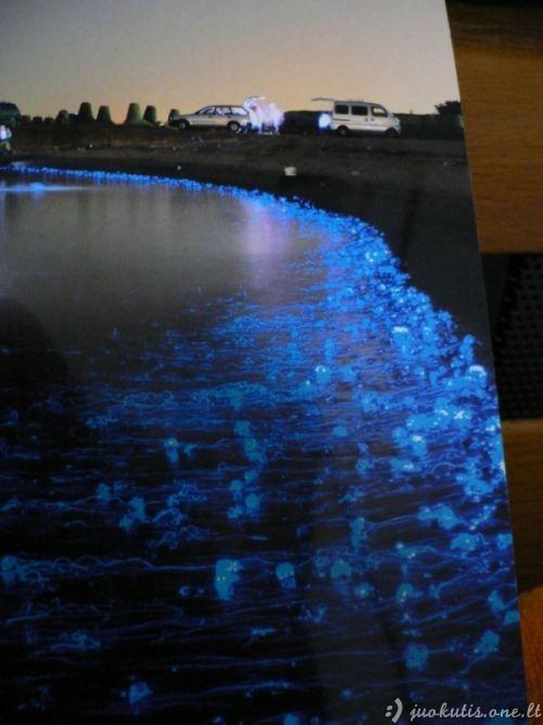 Švytinčios medūzos Japonijoje