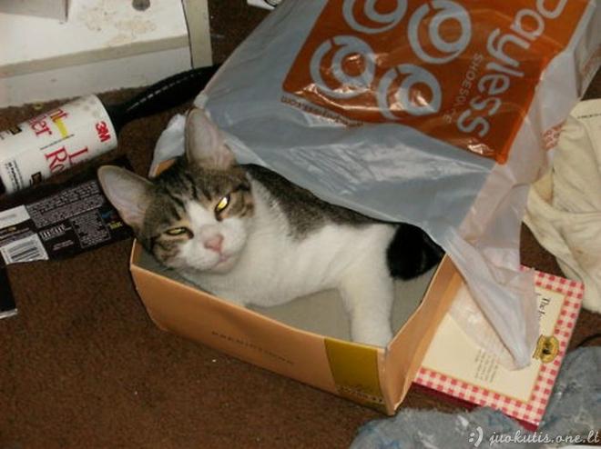 Katės ne savo vietoje