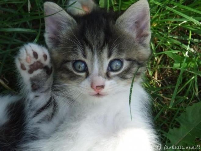 Nuostabūs katinėliai