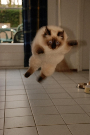 Skraidančios katės (2 dalis)