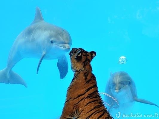 Delfinus supažindino su kitais gyvūnais