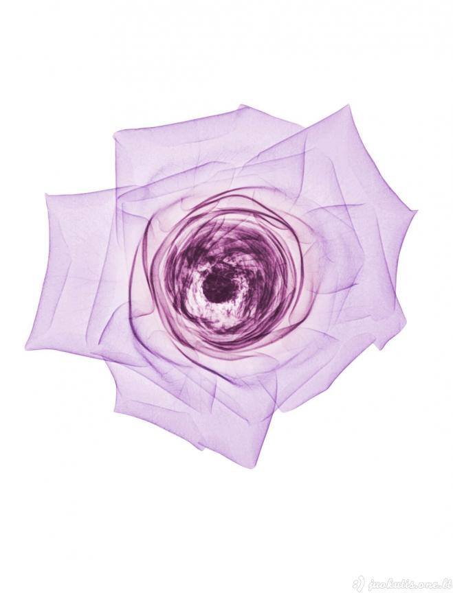 Gėlių rentgeno nuotraukos