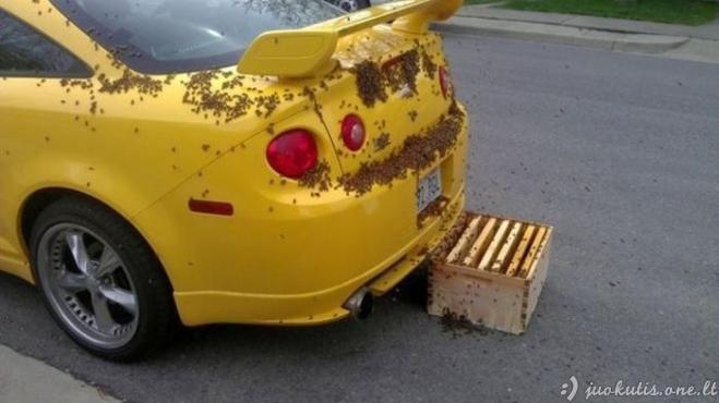 Chevrolet Cobalt SS saldesnis už medų