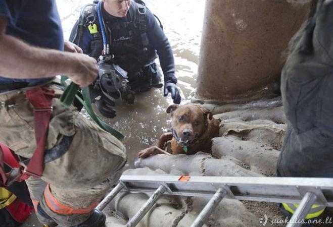 Šunelio gelbėjimo operacija iš patvinusio upelio