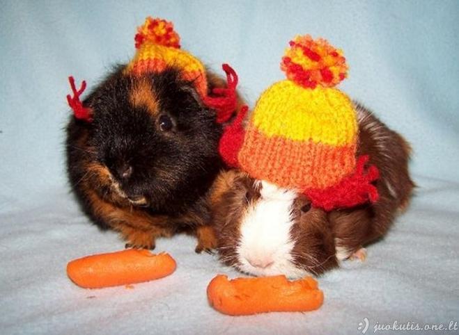 Gražiai apsirengę gyvūnai