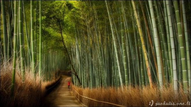 Gražūs bambuko miškai