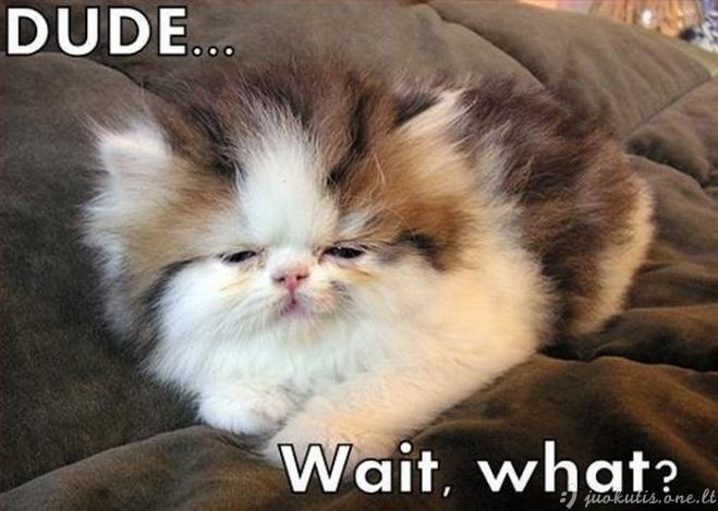 Pachmielingos katės