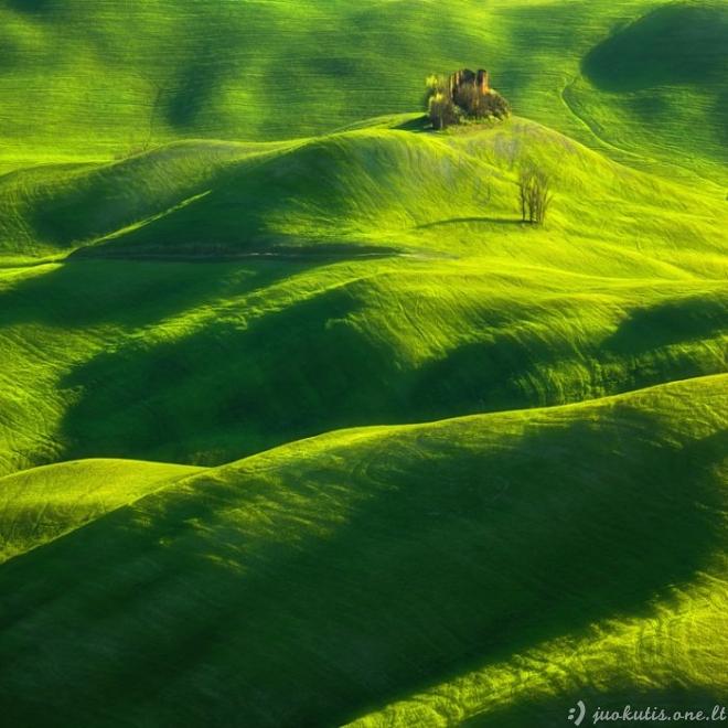 Žalios laukų bangos