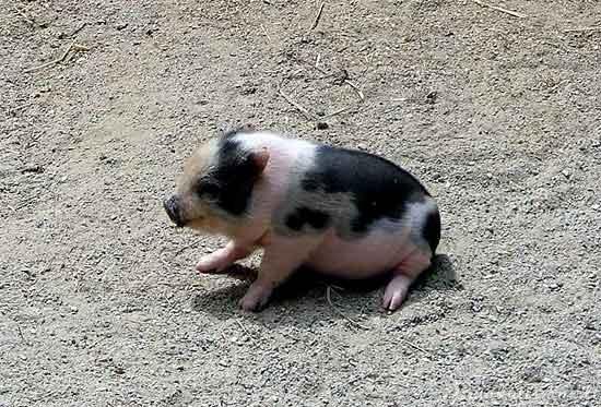 Gyvūnų mažyliai