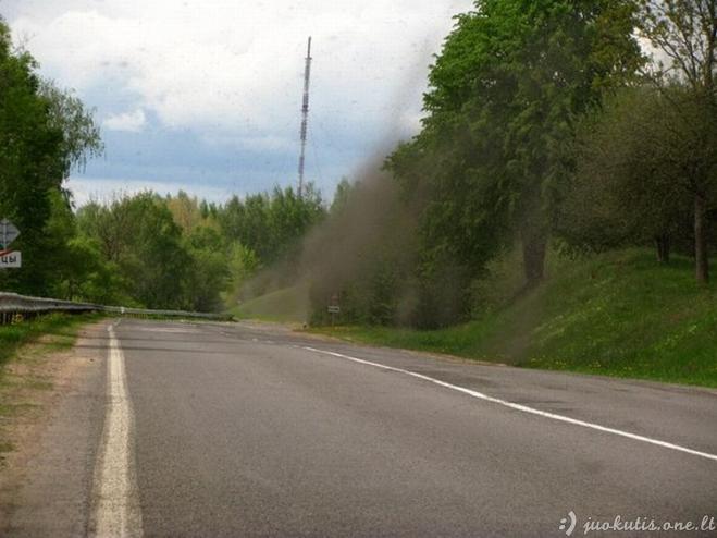 Uodai užpuolė Baltarusiją