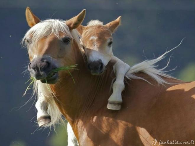 Mamos ir jų mažyliai