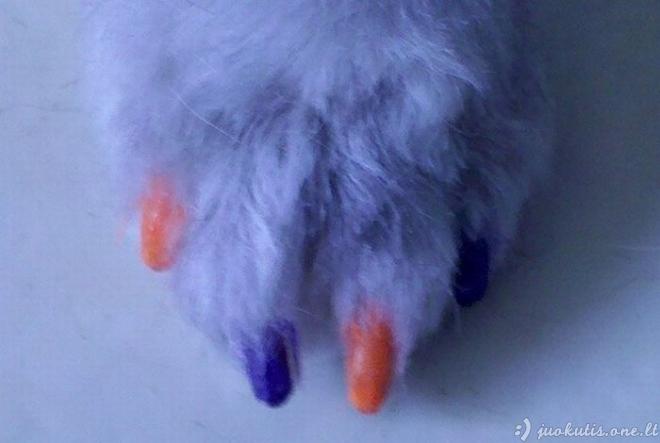 Šunų manikiūras