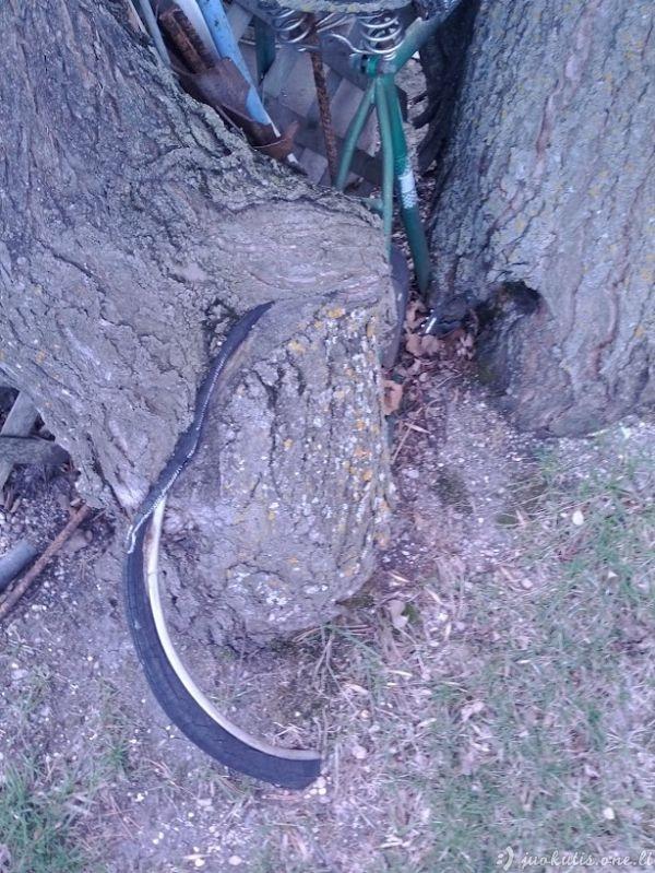 Amžina pora - medis ir dviratis