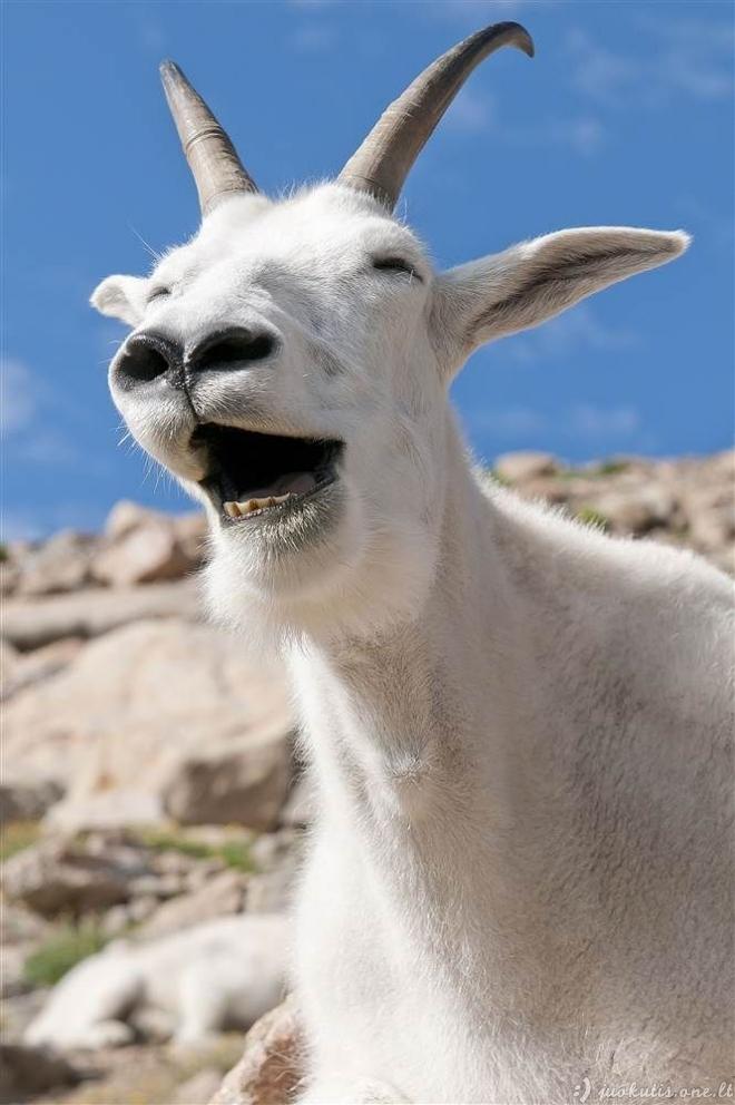 Gyvūnai, kurie šypsosi