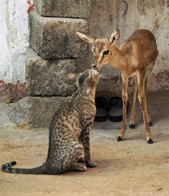 Nuotaiką pakeliantys gyvūnai