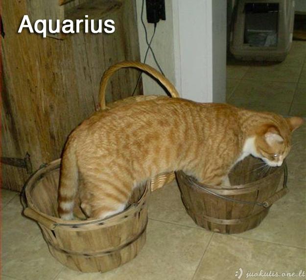 Katiniški zodiako ženklai