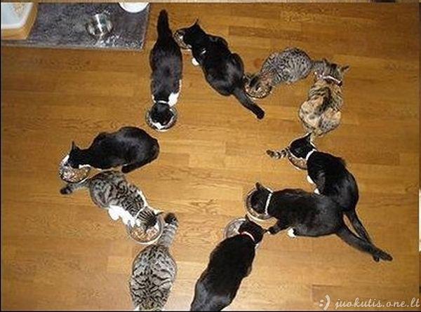 Kaip linksmintis su katėmis