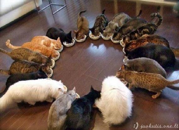 Smagios gyvūnų nuotraukos