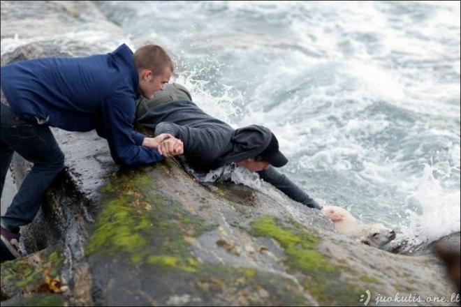 Gelbstint ėriuką, įkritusį į jūrą