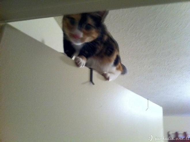 Katės nindzės