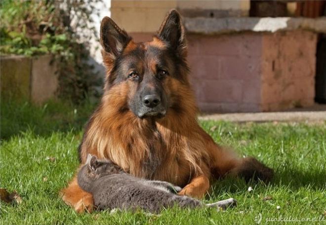 Šuns ir katės draugystė