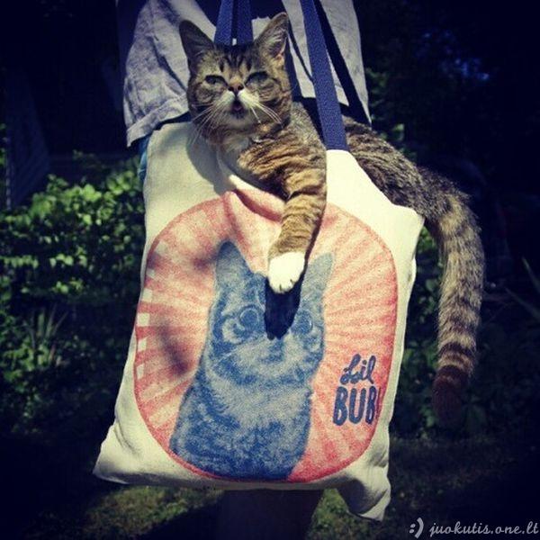 Keistas kačiukas liliputas
