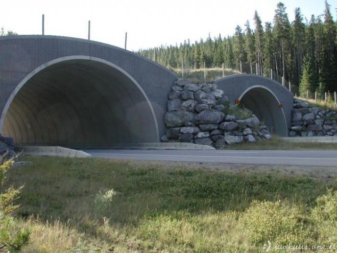 Tiltai gyvūnams