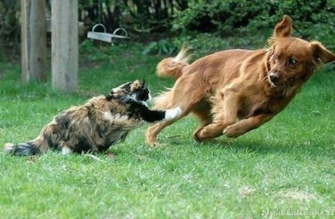 Nuostabios kačių nuotraukos, padarytos reikiamu momentu