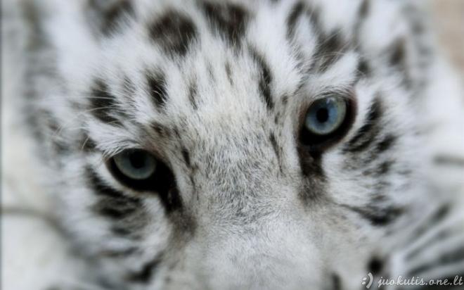 Nerealios gyvūnų nuotraukos