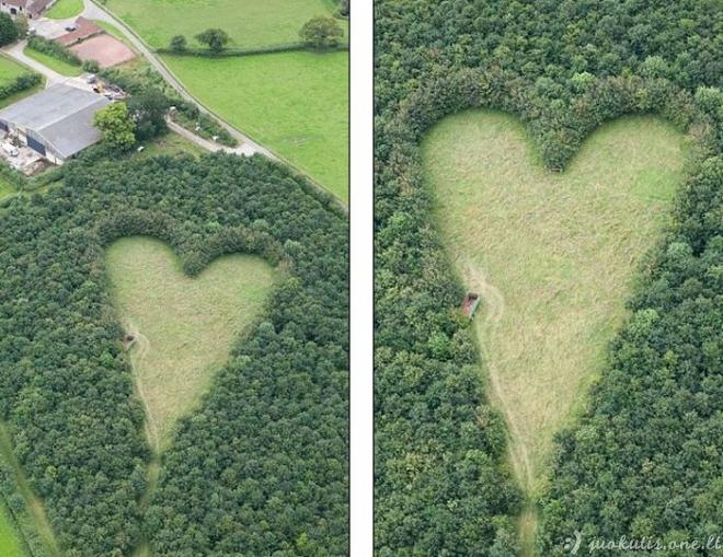 Širdis iš ąžuolo