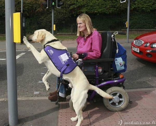Universalus šuo