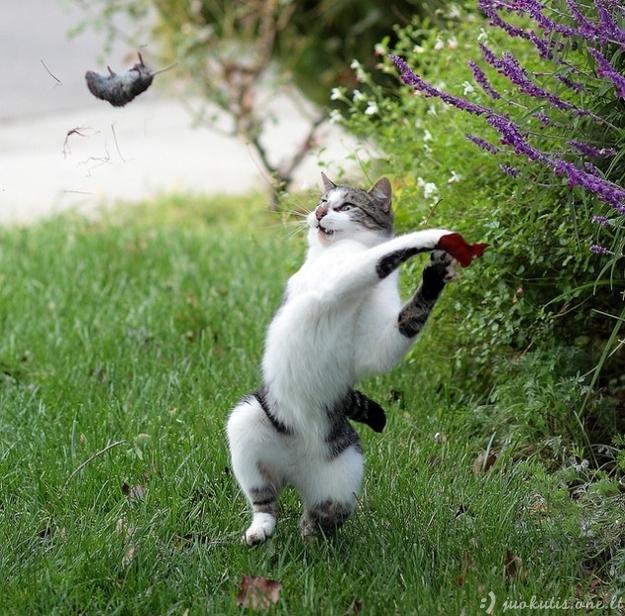 Juokingos kačių nuotraukos