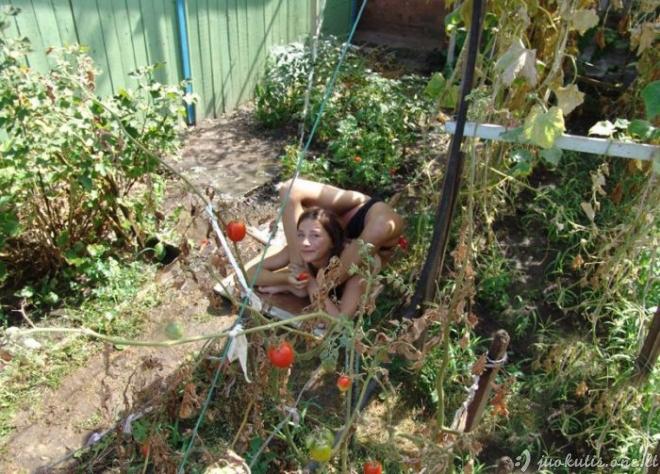 Lanksti sodininkė