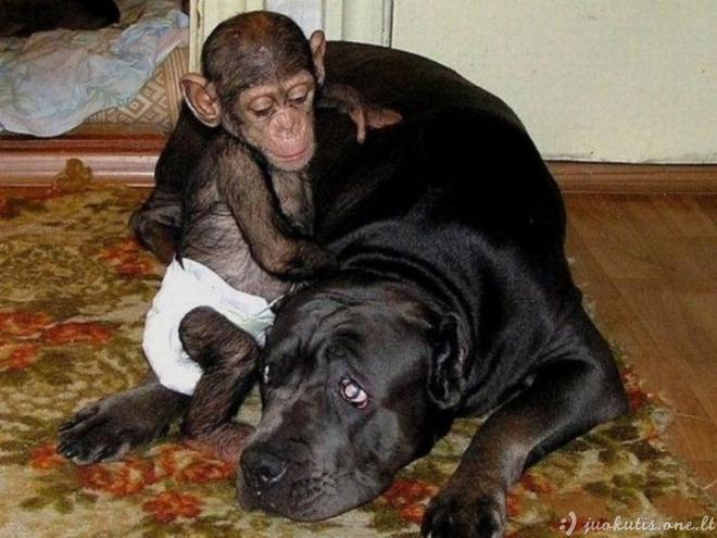 Beždžionėlę užaugino šuo