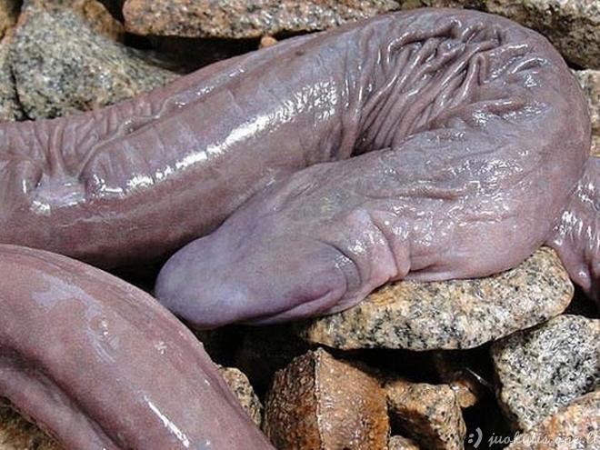 Mokslininkai atrado gyvatę, panašią į penį