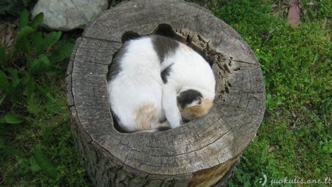 Patogiausia vieta poilsiui: kačių versija