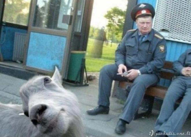 Gyvūnai stebi tave...