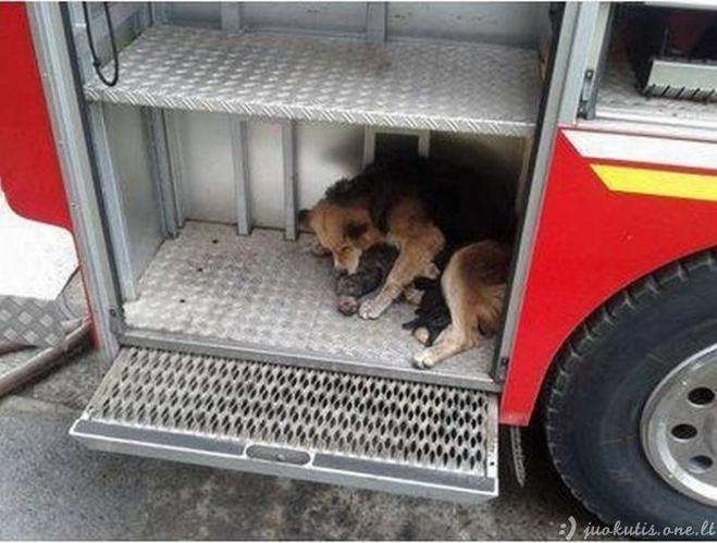 Kalė išgelbėjo savo vaikus iš degančio namo