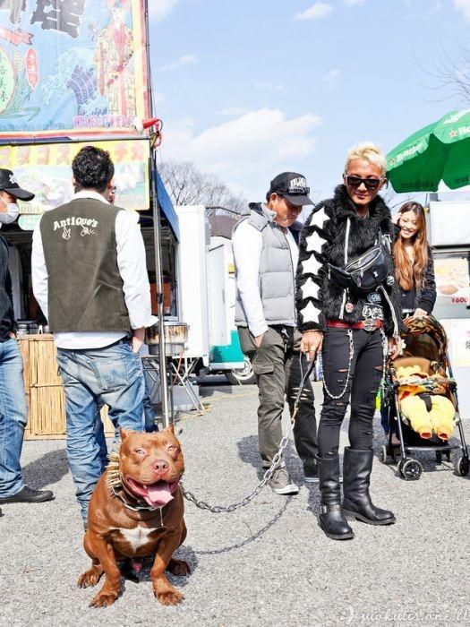 Stilingi japonų šunys