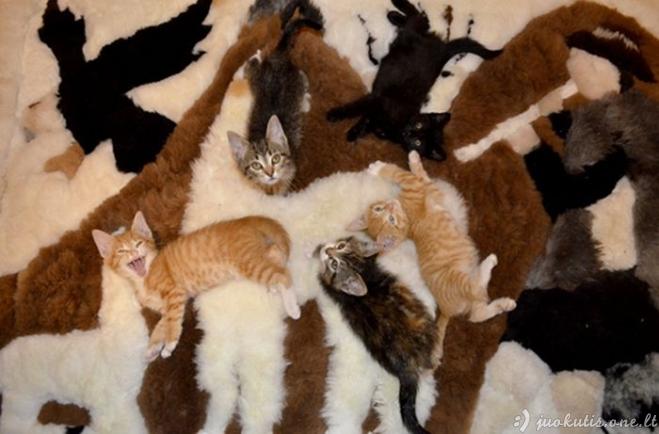 Gyvūnai užsimaskavo