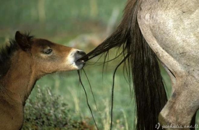 Magiškos gyvūnų nuotraukos