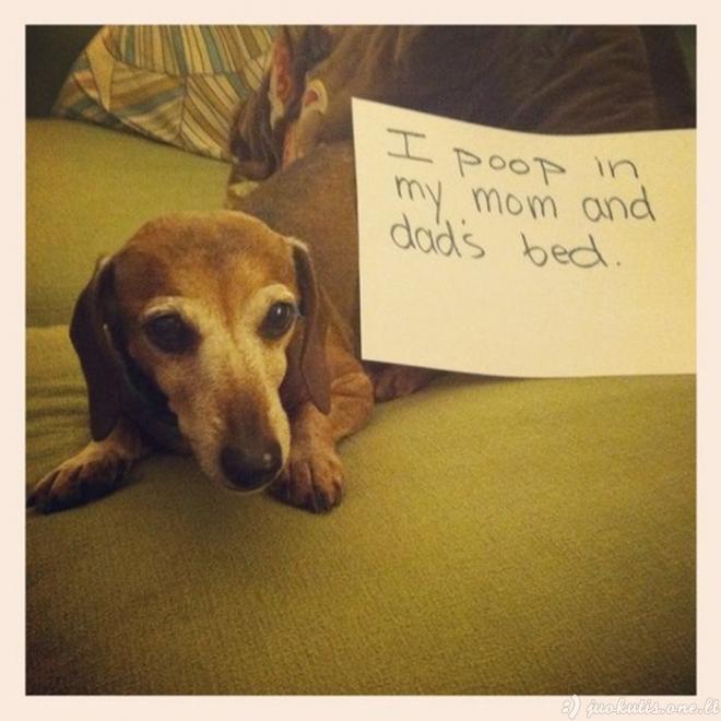 Blogų šunų klubas