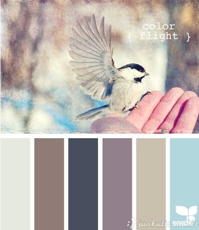 Geriausiai spalvas derina gamta