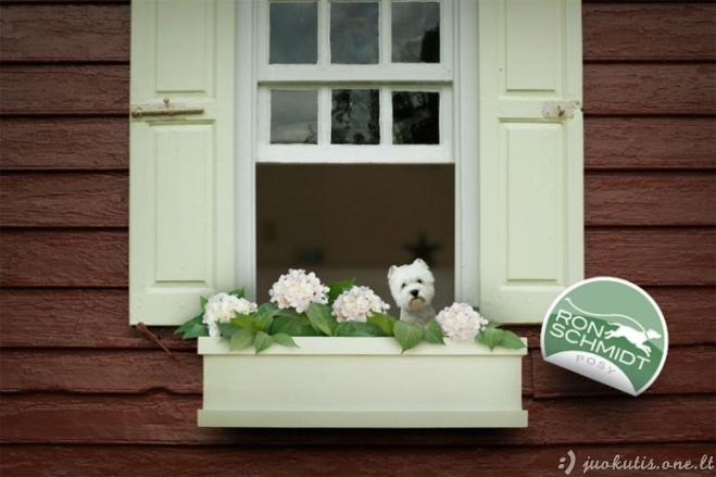 Nuostabios šunų nuotraukos