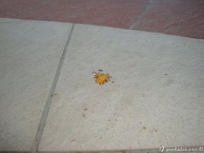 Komandinis skruzdėli�...