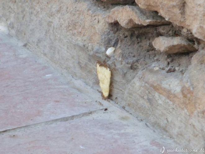 Komandinis skruzdėlių darbas